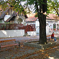Horse-chestnut trees on the pedestrian street near the castle - Miskolc, Maďarsko