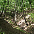 Small brook on the bottom of the valley in the forest - Börzsöny Mountains, Macaristan