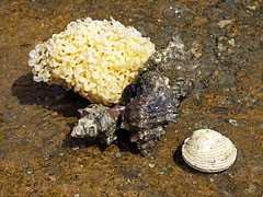 Seaside treasures, at least for the children (a marine sponge, a snail shell and another shell) - Slano, Croácia