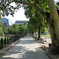 Walkway and plane trees in the park - Budapest, Hungría
