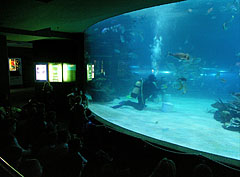 The shark feeding can be watched from an auditorium in every thursday afternoon - Budapest, Hongrie