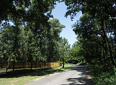 The only car road of the peninsula, surrounded by tall trees - Budapest, Hongrie