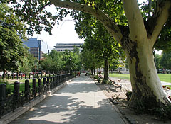Walkway and plane trees in the park - Budapest, Unkari