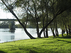 Fress green grass on the riverside free beach, as well as the Drava Bridge at Barcs - Barcs, Madžarska
