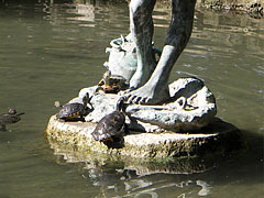 """Red-eared slider terrapins (Trachemys scripta elegans) on the statue of the crab fishing boy (""""Rákászfiú"""") - Budapeszt, Węgry"""
