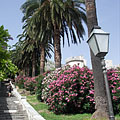 Row of palm trees beside the stairs of Uz Posat - Дубровник, Хърватия