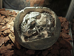 Fossilized dinosaur egg with an embryo (Mussaurus patagonicus) - Budapest, Ungarn