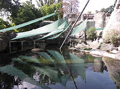 Pool of the African penguins and the harbour seals - Budapest, Ungarn