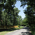 The only car road of the peninsula, surrounded by tall trees - Budapest, Ungarn