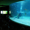 The shark feeding can be watched from an auditorium in every thursday afternoon - Boedapest, Hongarije