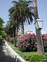 Row of palm trees beside the stairs of Uz Posat - دوبروفنيك, كرواتيا