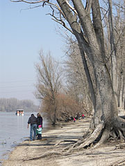 The Danube bank of Dunakeszi in early spring - Dunakeszi, هنغاريا