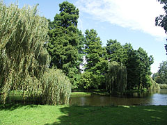 English landscape style park with a pond, willows and other trees - Amsterdam, Netherlands