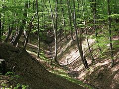 Small brook on the bottom of the valley in the forest - Börzsöny Mountains, Hungary