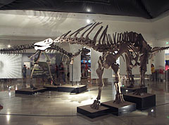 Amargasaurus cazaui, a member of the sauropod dinosaurs, although it is smaller than its relatives, it is even more interesting - Budapest, Hungary