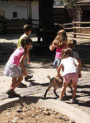 Petting zoo with goats and of course children - Budapest, Hungary