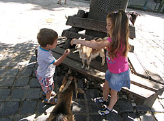 Curious goats ask for food from the children in the Petting Zoo - Budapest, Hungary