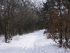 The Cinkota Forest in big snow - Budapest, Hungary