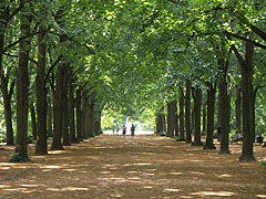 The linden alley with four row of trees goes to the Elisabeth statue - Gödöllő, Hungary