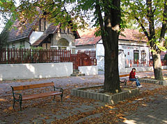 Horse-chestnut trees on the pedestrian street near the castle - Miskolc, Hungary