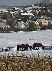 Snowy landscape with horses and houses of the village - Mogyoród, Hungary
