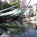 Pool of the African penguins and the harbour seals - 布达佩斯, 匈牙利