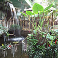 """Tropical Forest"", every quarter hour an artificial storm is coming with rain and thunder simulation - 布达佩斯, 匈牙利"